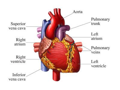 depression-cause-heart-attack-1